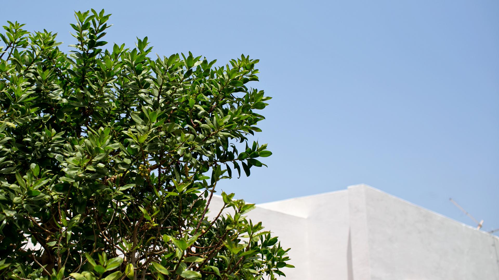 Reportage pantelleria